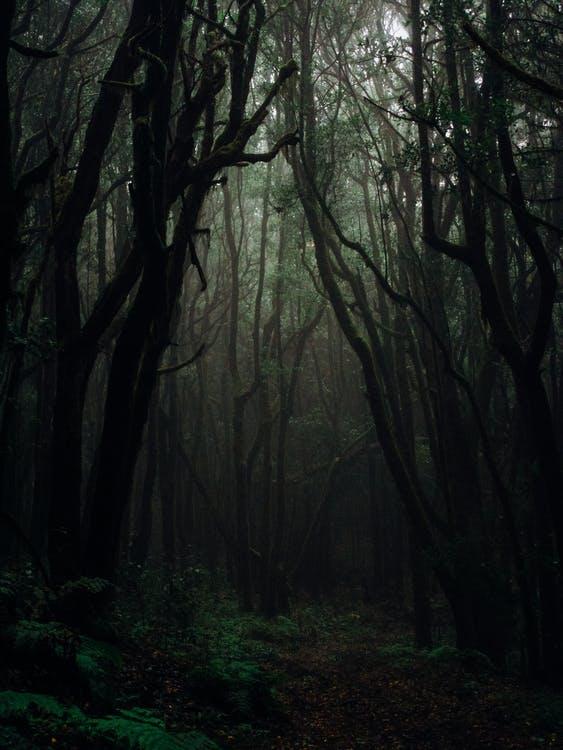 darktree